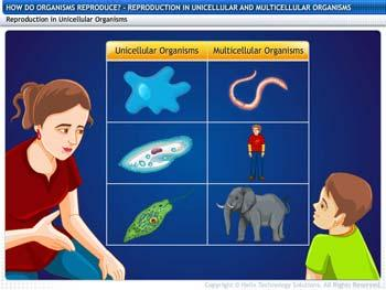Animated video Lecture for Reproduction in Unicellular and Multicellular Organisms