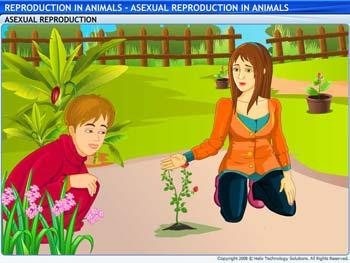 Animated video Lecture for Asexual Reproduction in Animals