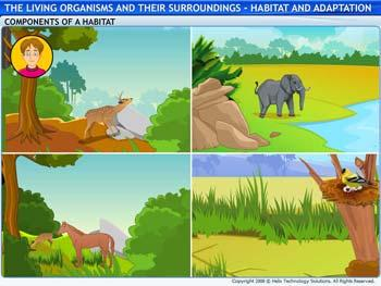 Animated video Lecture for Habitat and Adaptation