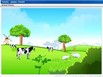 Animated video Lecture for Animal Tissues