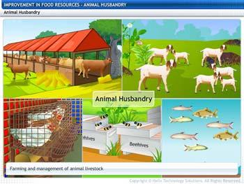Animated video Lecture for Animal Husbandry