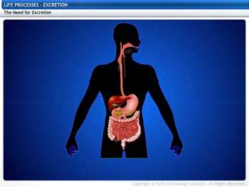Animated video Lecture for Excretion
