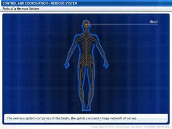 Animated video Lecture for Nervous System