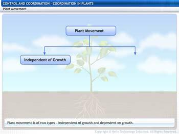 Animated video Lecture for Coordination in Plants