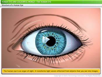 Animated video Lecture for Human Eye