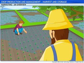 Animated video Lecture for Harvest and Storage