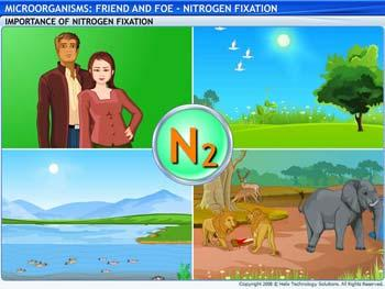 Animated video Lecture for Nitrogen Fixation
