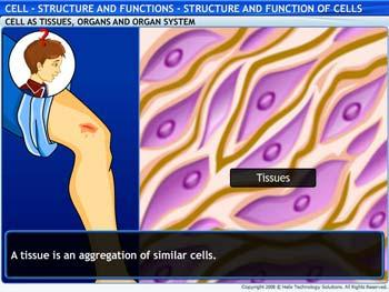 Animated video Lecture for Structure and Function of Cells