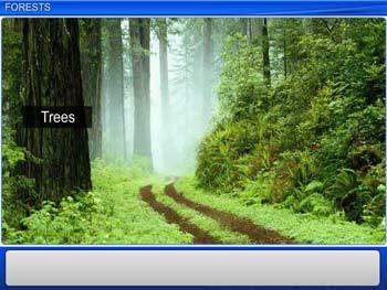 Animated video Lecture for Forests