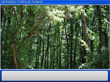 Animated video Lecture for Different Types of Forest