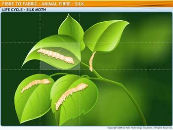 Animated video Lecture for Animal Fibre - Silk