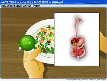 Animated video Lecture for Digestion in Humans