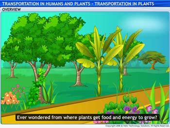 Animated video Lecture for Transportation in Plants