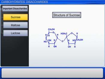 Animated video Lecture for Carbohydrates: Disaccharides