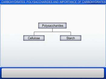 Animated video Lecture for Carbohydrates: Polysaccharides And Importance Of Carbohydrates