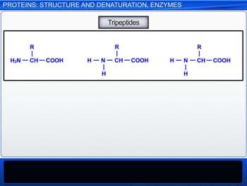 Animated video Lecture for Proteins: Structure And Denaturation, Enzymes