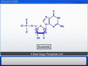 Animated video Lecture for Nucleic Acids