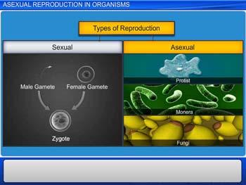 Animated video Lecture for Asexual Reproduction In Organisms