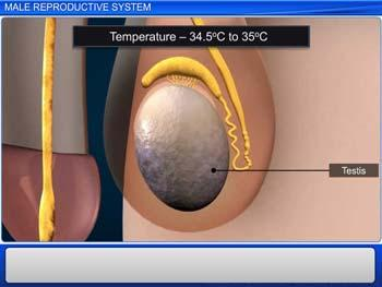 Animated video Lecture for Male Reproductive System