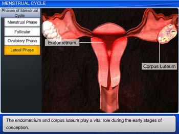 Animated video Lecture for Menstrual Cycle