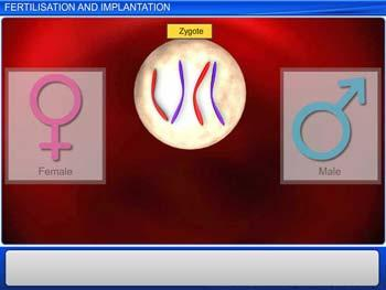 Animated video Lecture for Fertilisation And Implantation
