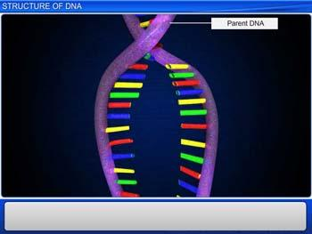 Animated video Lecture for Structure of DNA