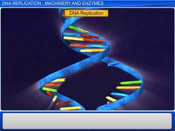 Animated video Lecture for DNA Replication : Machinery and Enzymes