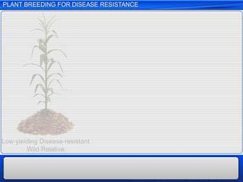 Animated video Lecture for Plant Breeding For Disease Resistance