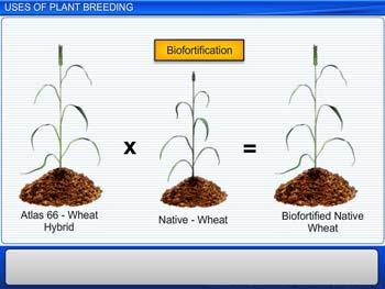 Animated video Lecture for Uses of Plant Breeding