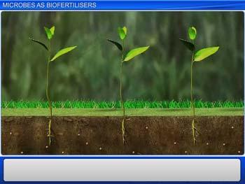 Animated video Lecture for Microbes As Biofertilisers