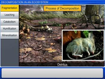 Animated video Lecture for Decomposition in an Ecosystem