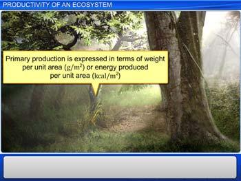 Animated video Lecture for Productivity of an Ecosystem