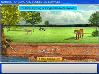 Animated video Lecture for Nutrient Cycling and Ecosystem Services