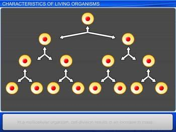 Animated video Lecture for Characteristics of Living Organisms