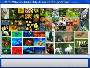Animated video Lecture for Taxonomic Categories