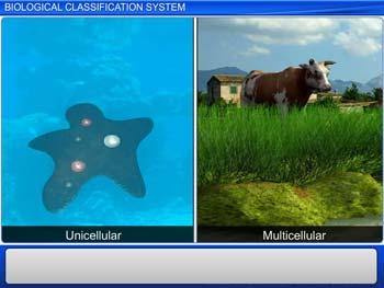 Animated video Lecture for Biological Classification System