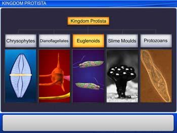 Animated video Lecture for Kingdom Protista