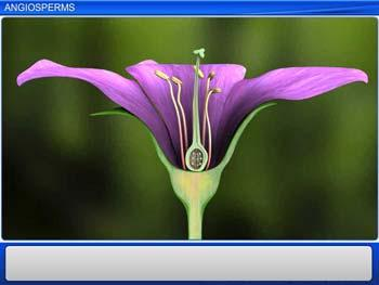 Animated video Lecture for Angiosperms