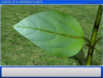 Animated video Lecture for Leaves of Flowering Plants
