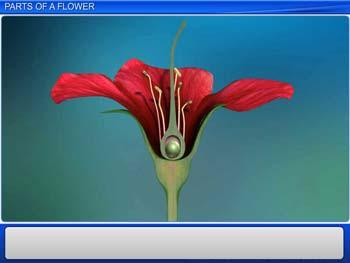 Animated video Lecture for Parts of a Flower