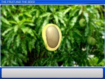 Animated video Lecture for The Fruit and the Seed
