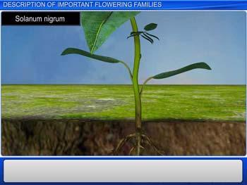 Animated video Lecture for Description of Important Flowering Families