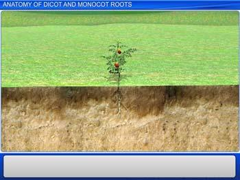 Animated video Lecture for Anatomy of Dicot and Monocot Roots