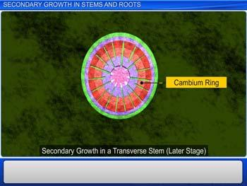 Animated video Lecture for Secondary Growth in Stems and Roots