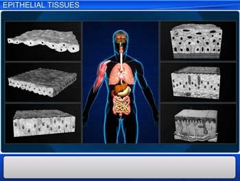 Animated video Lecture for Epithelial Tissues