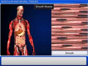 Animated video Lecture for Muscular and Neural Tissues
