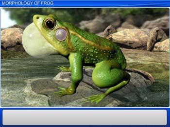 Animated video Lecture for Morphology of Frog