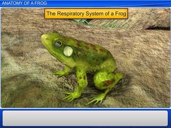 Animated video Lecture for Anatomy of Frog