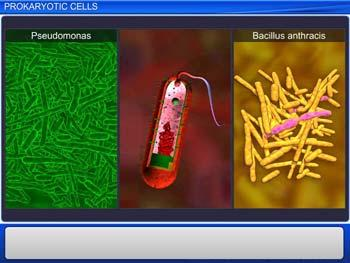 Animated video Lecture for Prokaryotic Cells
