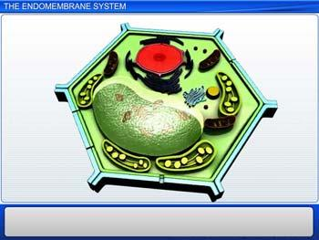 Animated video Lecture for The Endomembrane System